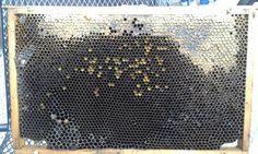 V horní části rámku s pláství jsou zavíčkované buňky s medem a pod ním jsou dosud otevřené buňky, do kterých včelky med ještě ukládají (takové to třpyťavé), proložené buňkama s pylem. Ten je součástí potravy včelí matky.