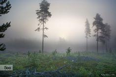 Misty forest by Markku Talvipuro on 500px