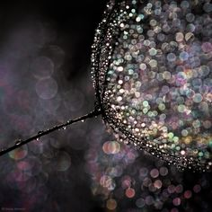 1X - Seedling by Ursula Abresch
