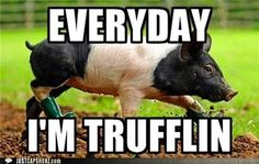 Everyday we're trufflin!