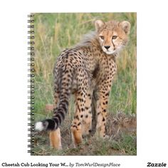 Cheetah Cub Looking Your Way. Spiral Notebook