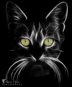 (I) (i) por Peyman Az - Gatos Cat Drawing, Painting & Drawing, Drawing Tips, Animal Paintings, Animal Drawings, Black Paper Drawing, Photo Chat, Beginner Painting, Fractal Art