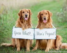 pregnancy dog announcement sign – Etsy