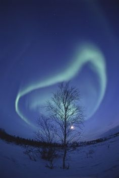 Spiral Aurora and Winter Tree, Yellowknife, Northwest Territories, Canada. Photo by Nori Sakamoto.