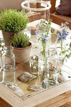 00406480. Plantas en macetas y flores y velas en botellas de cristal sobre la mesa de centro_00406480