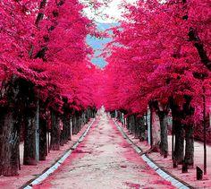 El Escorial, Madrid Cuando??? Quiero ir!!!