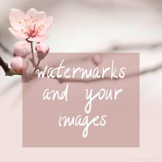 watermarking your blog images