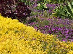 Desert Succulent Garden.