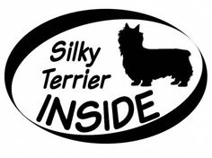 Hund Inside Auto AufkleberInside Aufkleber: Silky Terrier 1