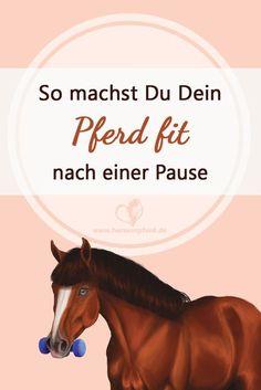 So machst Du Dein Pferd fit - Tipps für den Muskelaufbau.