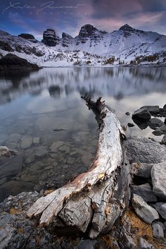 """""""Dead tree on Allos Lake""""  
