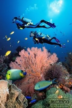 Buceo en Cancun - Cancun Diving