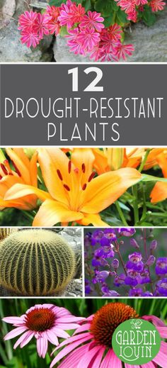 Desert Gardening for Beginners GardeningUrban Farming Pinterest