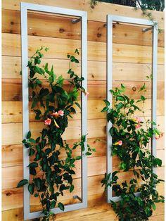 Wall Trellis, Garden Trellis, Garden Beds, Plant Trellis, Trellis Fence, Garden Walls, Rose Trellis, Garden Wall Art, Diy Trellis