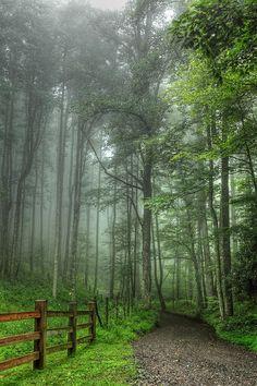 Blue Ridge - Trees In Fog Country Road II Canvas Print / Canvas Art by Dan…