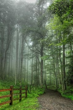 ✯ Blue Ridge - Trees in Fog Country Road