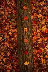 Résultats de recherche d'images pour «tumblr pictures autumn»