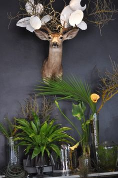 Jacques Erasmus Antler Art, Antlers, Sweet Stuff, Interior Inspiration, Deer, Flora, Decorating, Inspired, Awesome