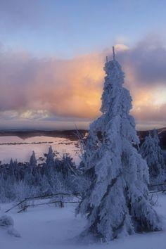 Snow Forest, Saxony, Germany