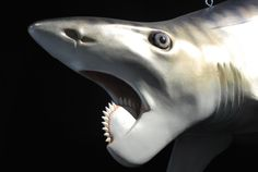 The Helicoprion featured a bizarre set of teeth resembling a buzz saw that had multiple functions, study shows. Photo by Brian Switek used by permission