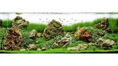 Want to learn aquascaping? Go to Wetarms.com/Sign-Up the links in our bio!  Mike Senske