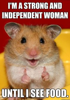 Easy Science for Kids All About Hamsters - Cute Little Animals. Learn more about Hamsters with our Online Science Facts for Kids on Hamsters! Cute Little Animals, Cute Funny Animals, Funny Cute, Hilarious, Funniest Animals, Funny Happy, Top Funny, Smiling Animals, Happy Animals