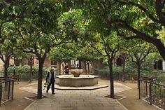 Peaceful Courtyard Planted with Orange Trees in the Raval District of Barcelona, Spain