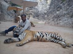 Down a tiger #GrabYourDream #Adventure #Travel #Contest