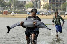 marina beach dolphin fish