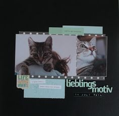 Layout by Susanne Vowinkel Scrapbooking Ideas, Layouts, Cats, Blog, Animals, Gatos, Animales, Animaux, Blogging