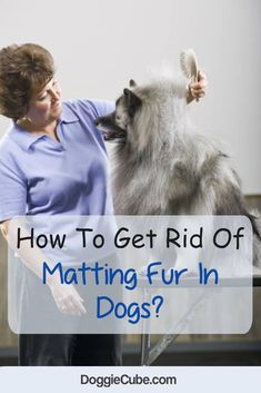 How to get rid of matting fur In dogs? Cute Dog Toys, Best Dog Toys, Dog Grooming Salons, Dog Grooming Tips, Matted Dog Hair, Dog Hair Removal, Outdoor Dog Toys, Dog Toy Storage, Homemade Dog Toys