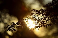 """Standing still at dusk Listen . . . in far distances The song of froglings!"" ― Yosa Buson (1716 - 1784) ― www.kusuyama.jp"