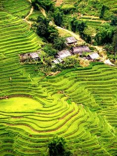 Sapa, Vietnam. Rice fields along the mountain side. Absolutely Beautiful to see.