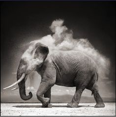 e61f735d974 Elephant With Exploding Dust