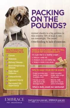 Pet obesity is a growing epidemic in the US.  Know the signs and learn tips to reverse them. For more helpful pet info, click the image.