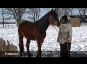 Help At-Risk Youth and Rescue Horses! JLC W.I.N.N.E.R. Program @ Aviva Community Fund