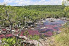 Vive un experiencia única en caño cristales. Come visit the most beautiful river in the world. #colorfulriver #cañocristales #macarenameta #colombia #ecoturismo #destinations #beautifulplaces