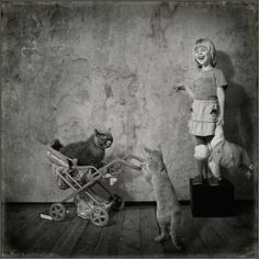 photo series andy prokh #cats