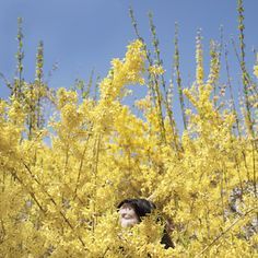 "Claire in the Forsythia, Rockport, Maine, 2010.  from ""You Look At Me Like An Emergency"". Cig Harvey"
