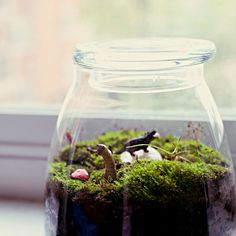 Terrariums centerpiece