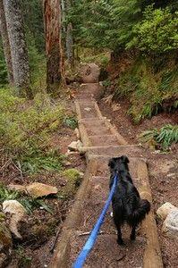 Hiking With Dogs - Washington Trails