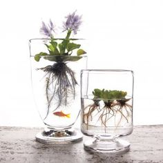Floating plants for inside- awesome decoration, and easy to integrate with a plant science unit!