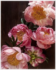 Peonies, one of my favorite flowers. My mom's favorite, too... @Georgia Ann Adey thought you would like this picture