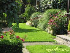 Pokażę nasz ogród - strona 332 - Forum ogrodnicze - Ogrodowisko