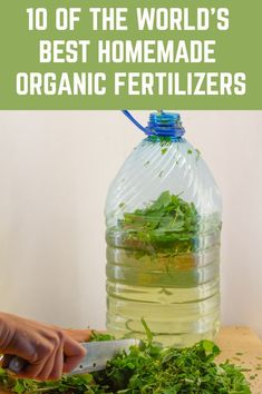 10 Of The World's Best Homemade Organic Fertilizers When it comes to organic gardening, the options for all-natural fertilizers can often be scarce on the shelves at your average supply store. Those that do exist are more expensive and while they may say Organic Fertilizer, Organic Gardening, Gardening Tips, Gardening Vegetables, Gardening Courses, Gardening Supplies, Organic Farming, Homemade Fertilizer For Plants, Homemade Plant Food
