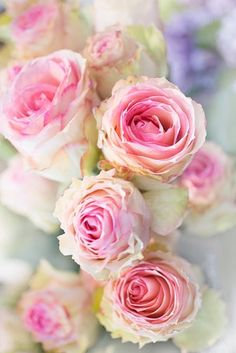 Pink roses. <3