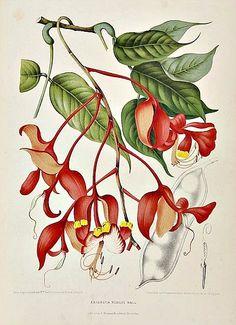 Flowers from Java by Hoola van Nooten
