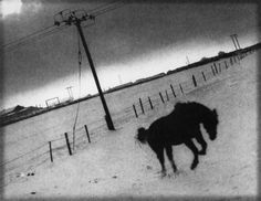 Andrew Sanderson, Jumping Horse, print from paper negative