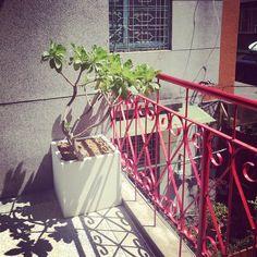 光影好美...心型鐵花與白水木的對話·情人專屬·With U #白水木 #鐵窗花 #老房子民宿 #