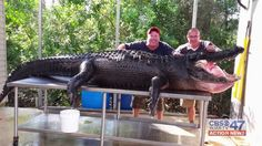 13 foot, 4 inches. 765 pounds. All caught on camera.